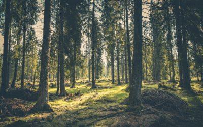 30 Day Rewilding Challenge